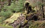 laidonforest